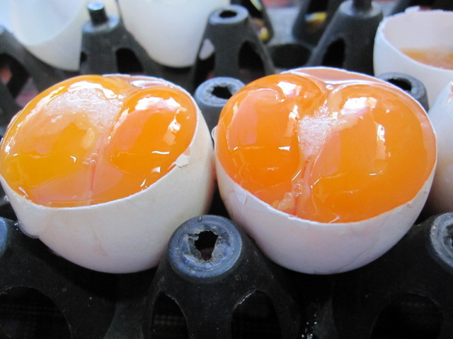 how-to-make-twin-egg-s (10)