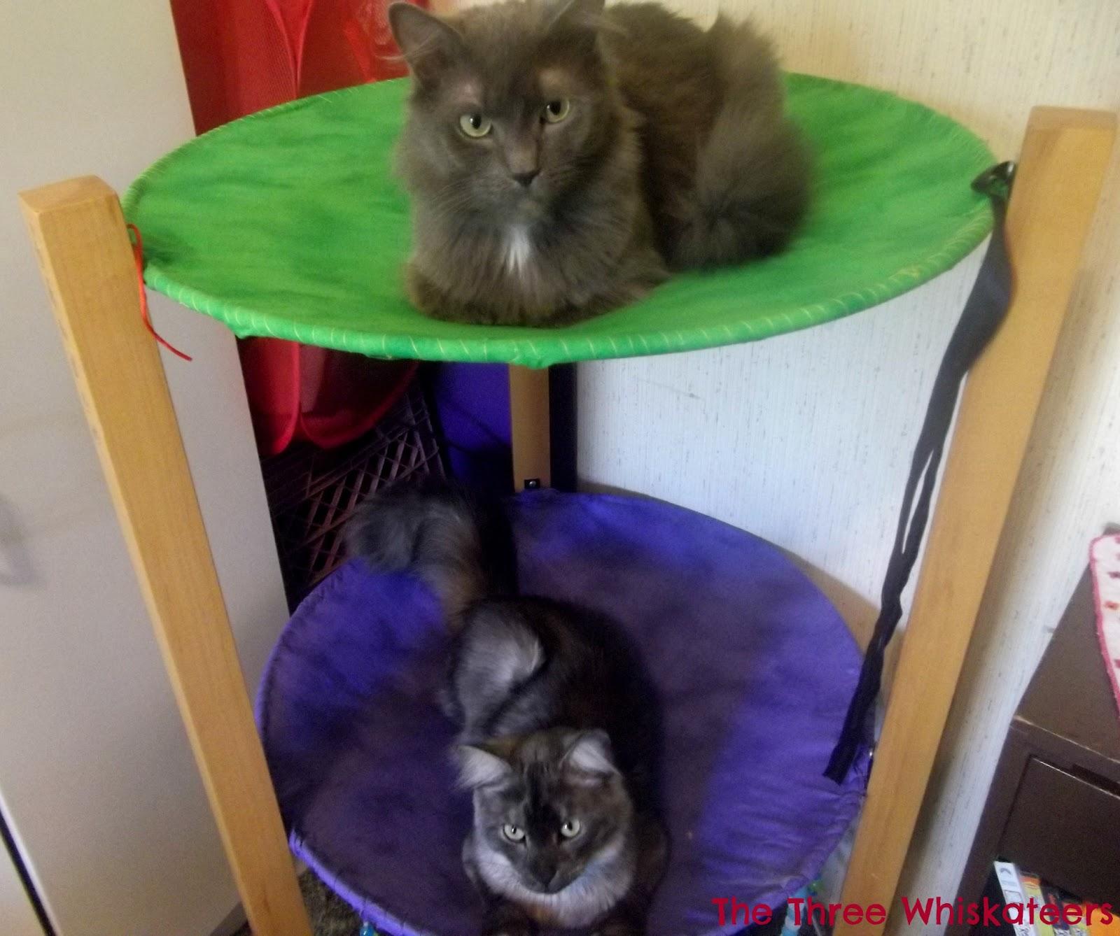 cat bunk beds (1)