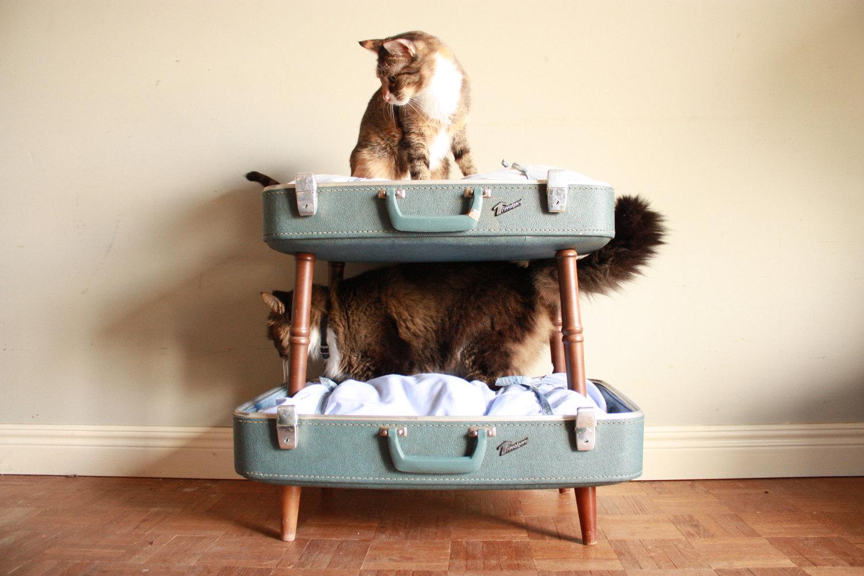 cat bunk beds (2)