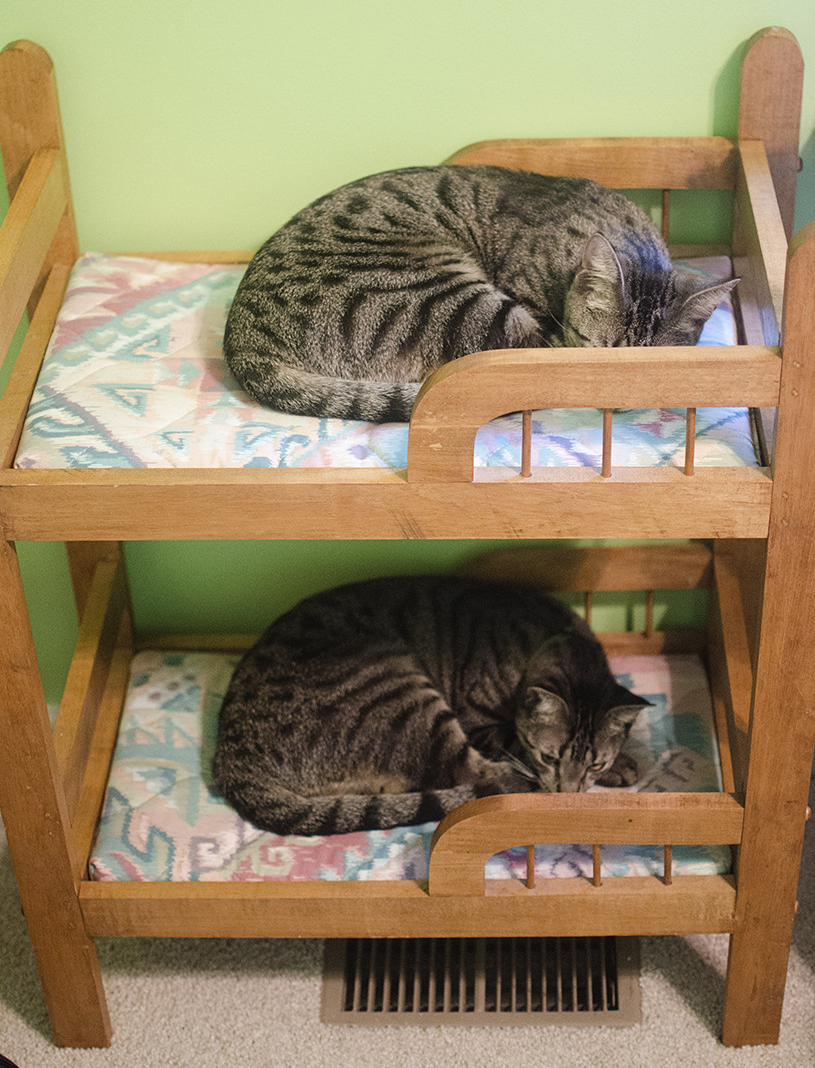 cat bunk beds (3)