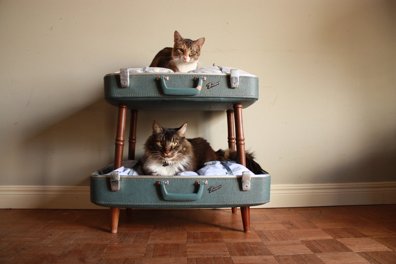 cat bunk beds (4)