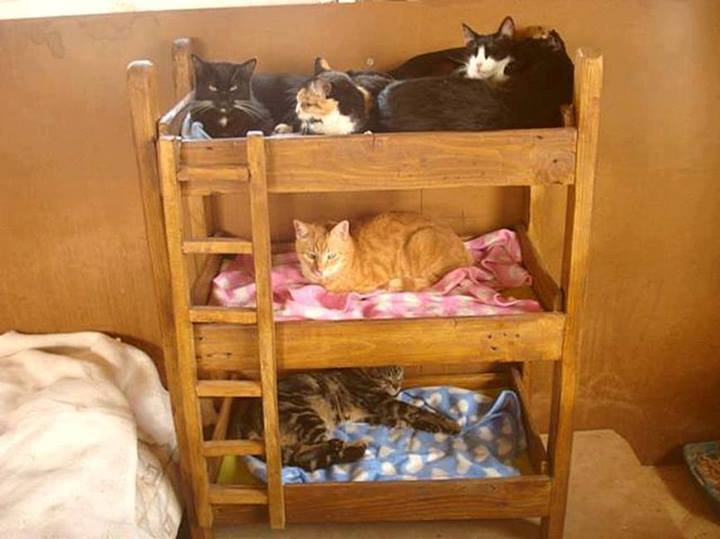 cat bunk beds (5)