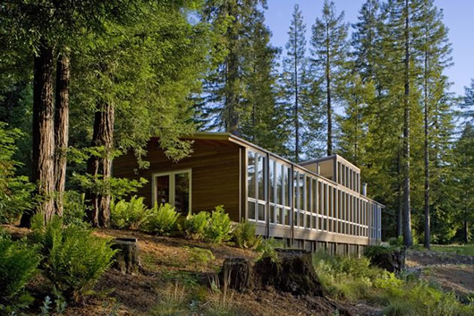 modern wood house forest (4)