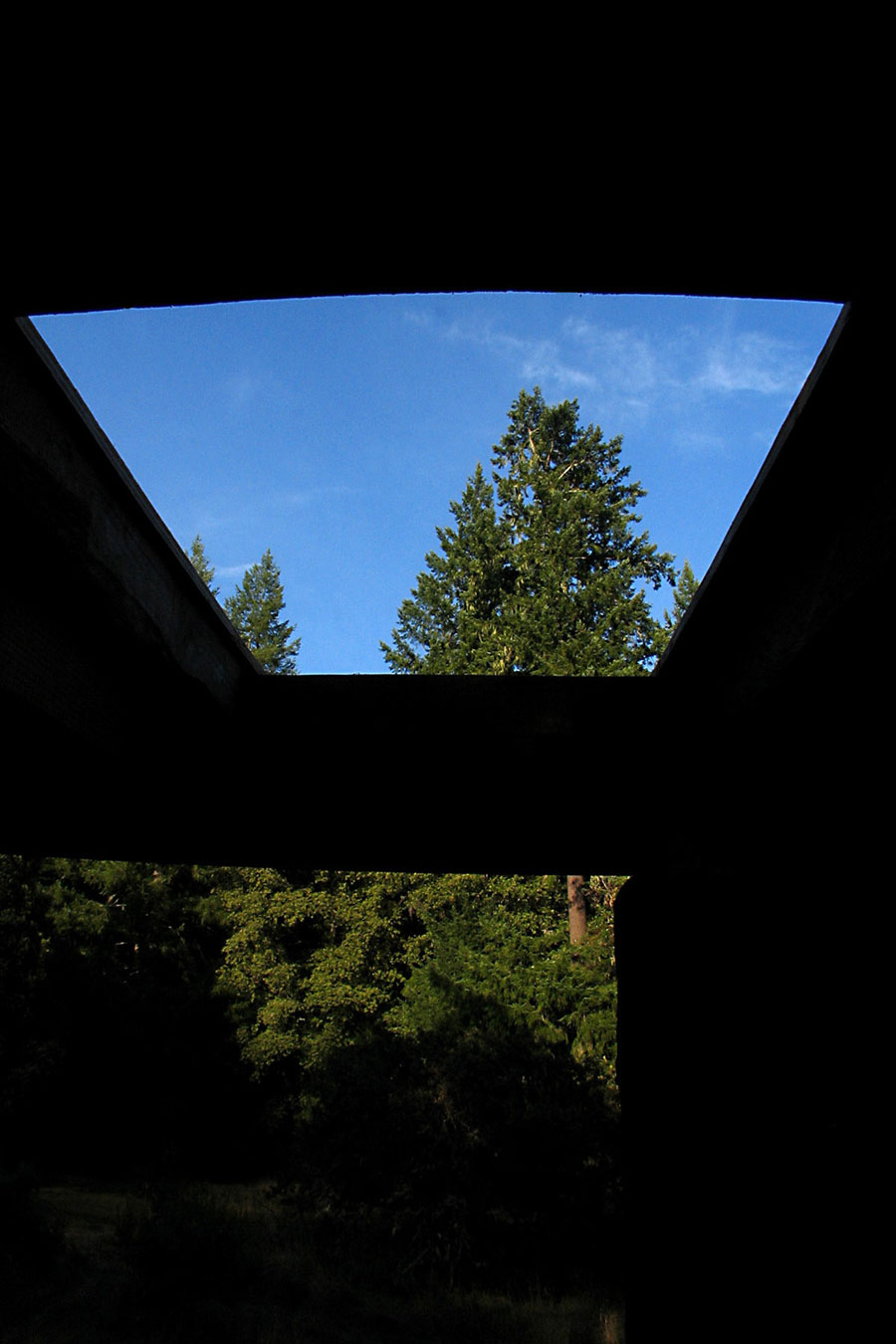 skylight-fir-small