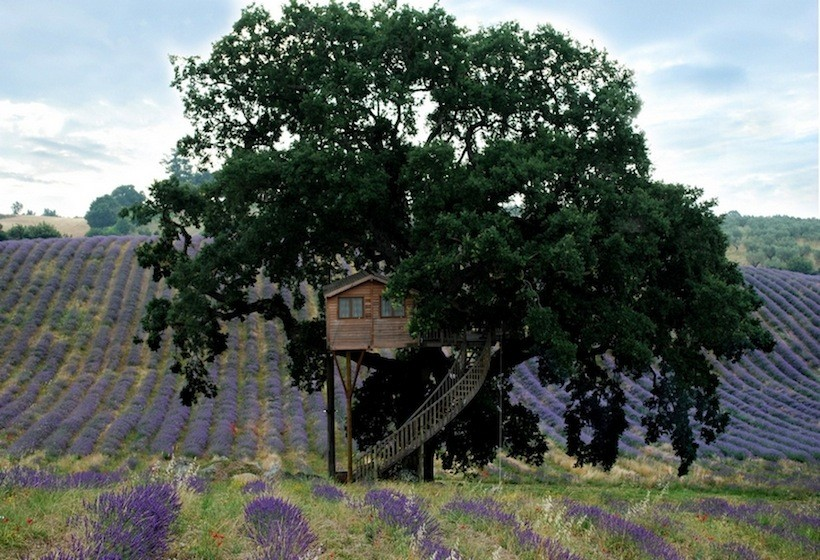 small treehouse wooden cottage (8)