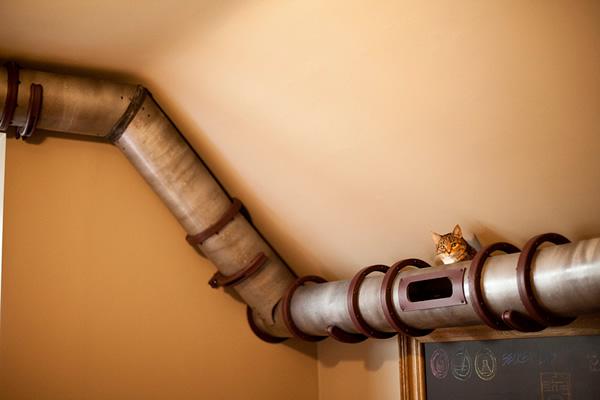 best house idea for cat kitten (11)