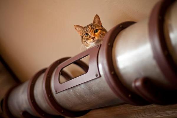 best house idea for cat kitten (2)