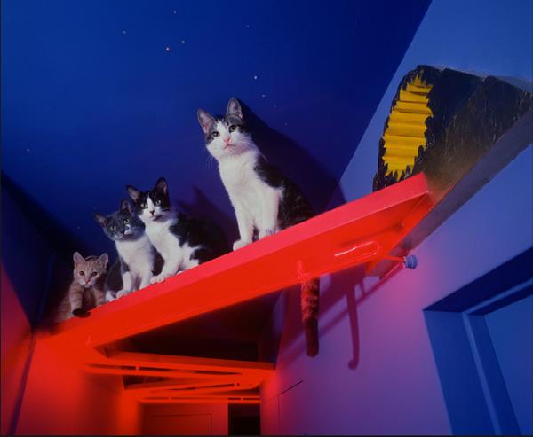 best house idea for cat kitten (7)