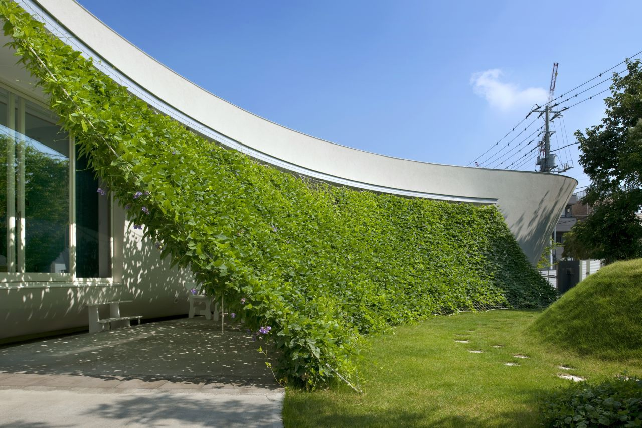green house natural plant to reduce temperture and electric cost (1)