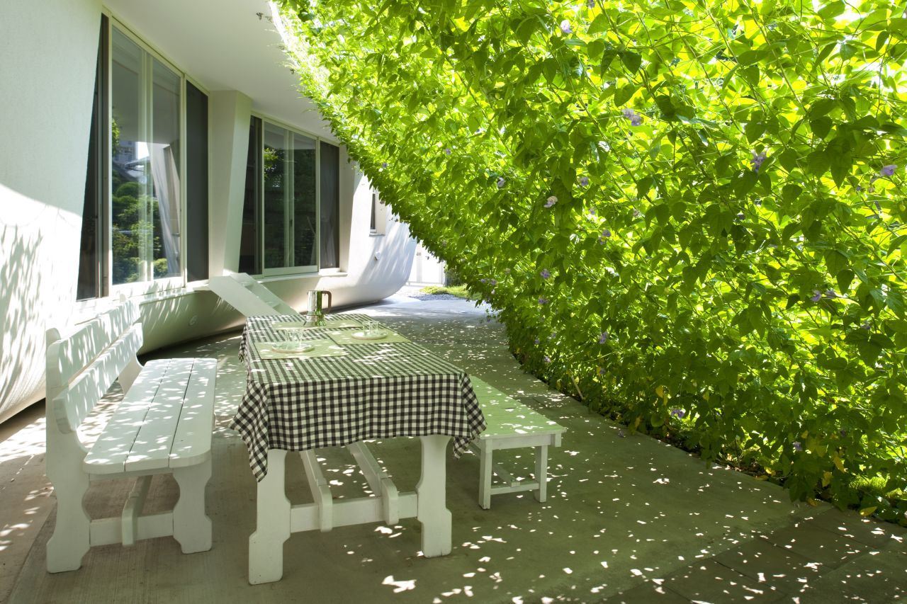 green house natural plant to reduce temperture and electric cost (4)