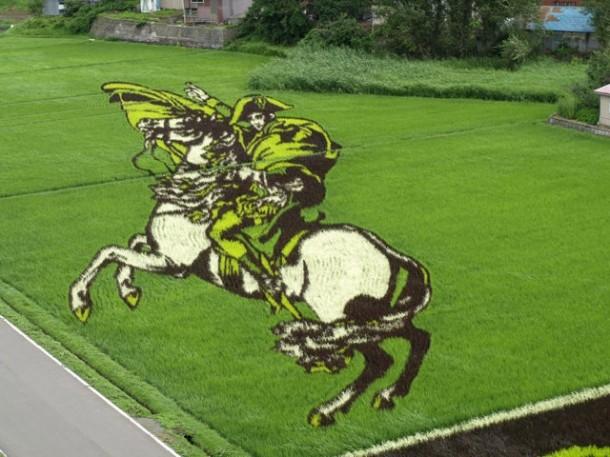 japan art rice field farm (1)