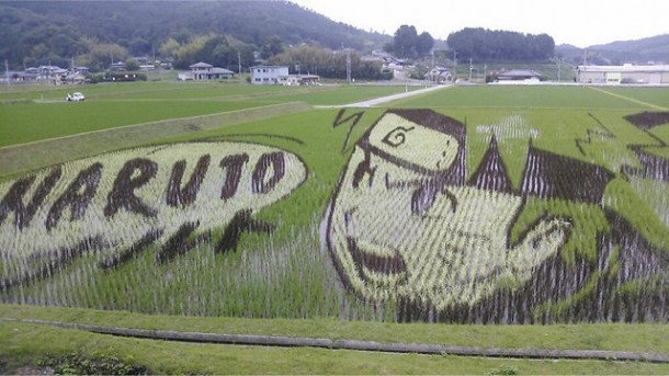 japan art rice field farm (5)