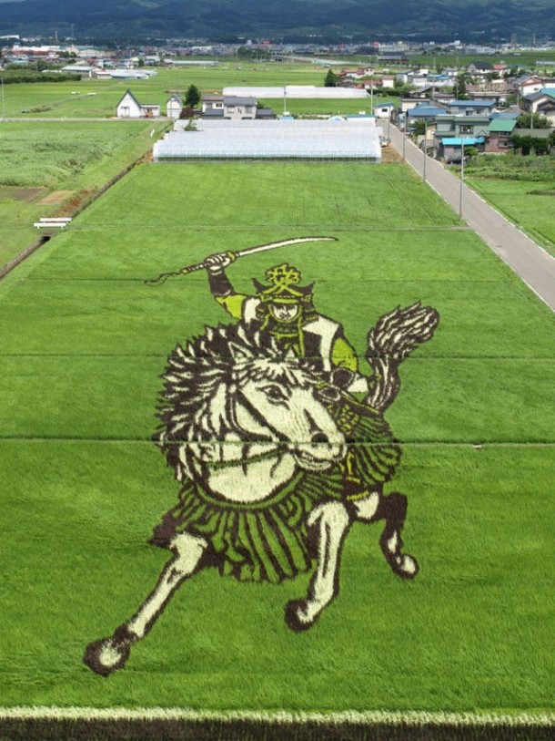 japan art rice field farm (6)