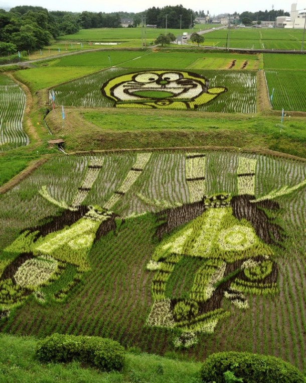japan art rice field farm (7)