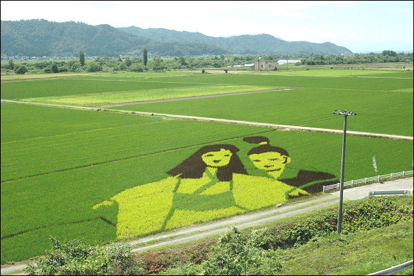 japan art rice field farm (8)