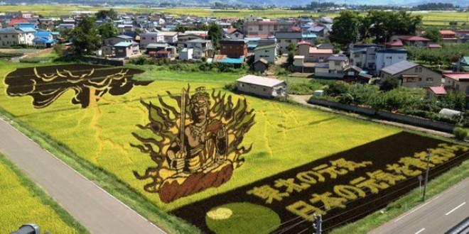 japan art rice field farm (9)