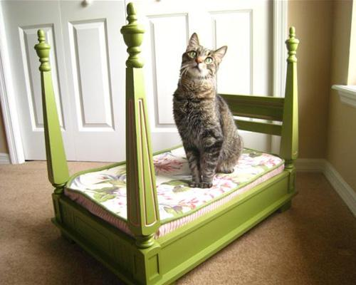 catbed1