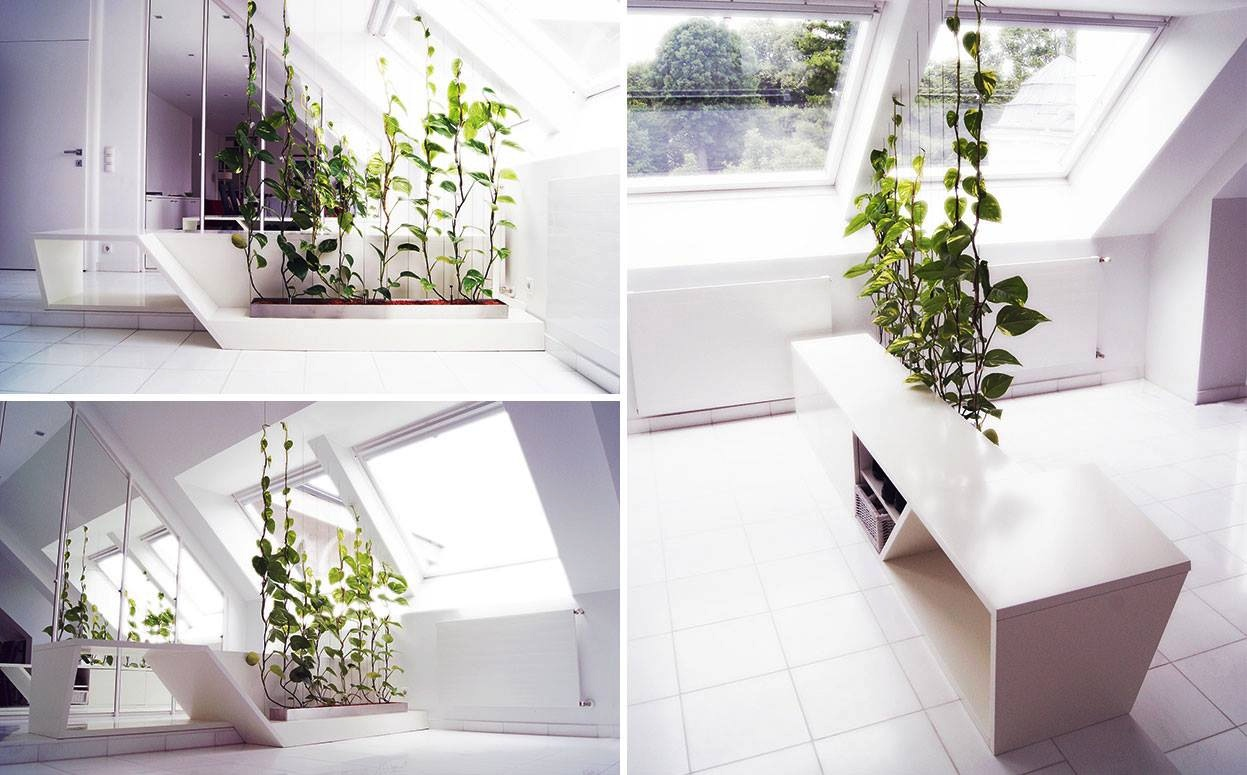 plants-as-partitions