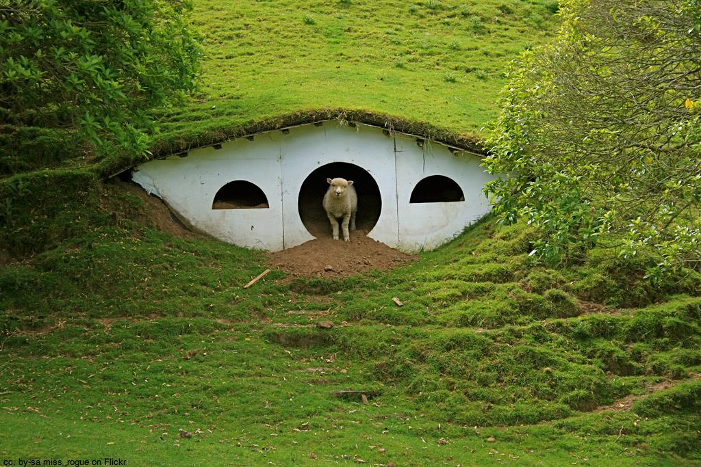 hobbiton-sheep-matamata-new-zealand