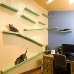 หนุ่มอเมริกันลงทุนนับล้านบาท แปลงโฉมบ้านให้เป็นสวรรค์ของแมว 18 ตัวที่เลี้ยงไว้