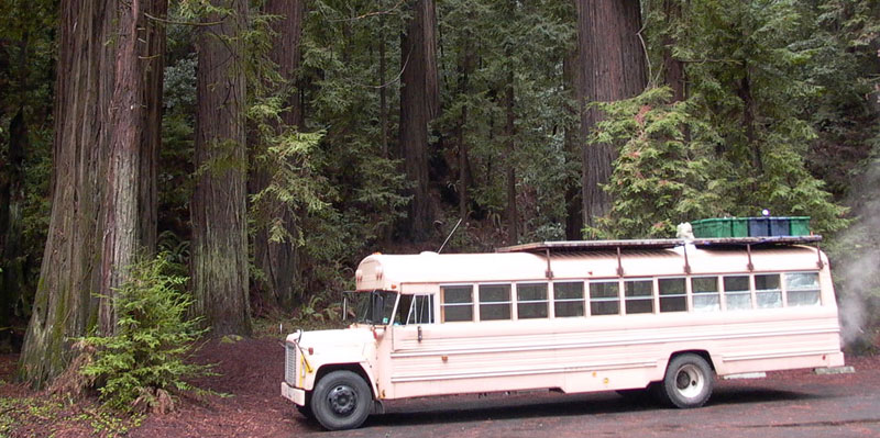 bus_in_redwoods