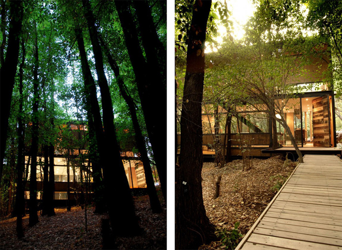 house modern contemporary in forest (1)
