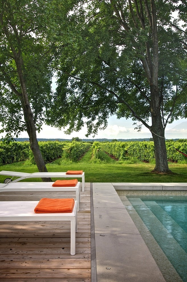 005-niagara-vineyard-renovation
