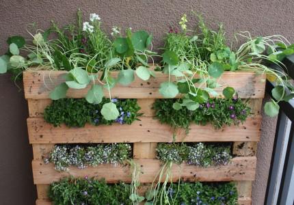 Pallet-into-a-Garden