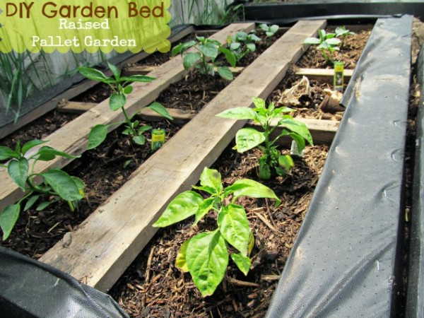 Raised-Wood-Pallet-Garden-Bed-600x450