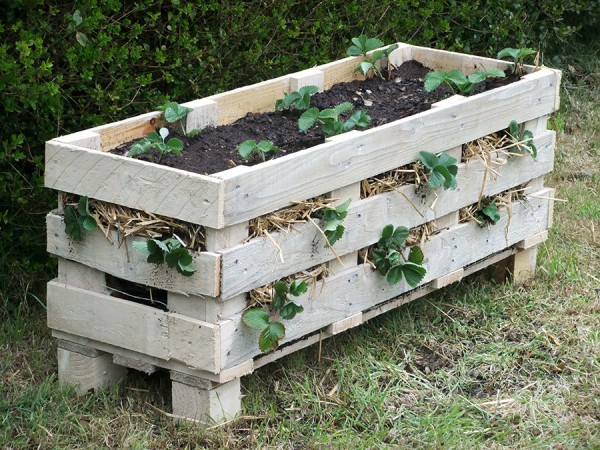 Strawberry-Pallet-Planter--600x450