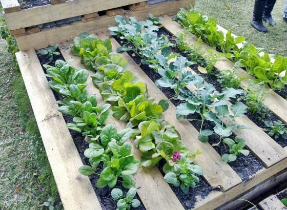 Wood-Pallet-Garden-Frames