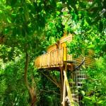 แบบบ้านต้นไม้ สร้างยกสูงขึ้นไปในบรรยากาศสีเขียวสดชื่น ตกแต่งภายในอย่างอบอุ่น