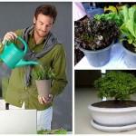 แนะนำ 7 แนวทาง สร้างพื้นที่สีเขียวและความเป็นธรรมชาติ ให้แก่บ้านสวยของเรา