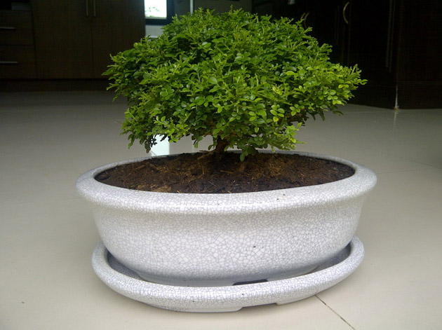 green-idea5