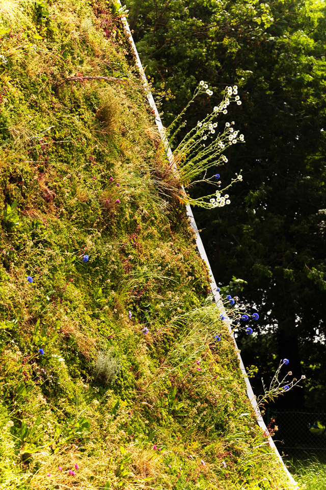 green roof eco house idea (1)