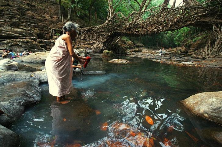 indian root bridge (2)
