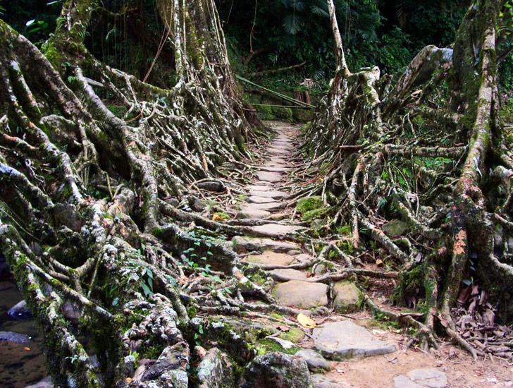 indian root bridge (3)