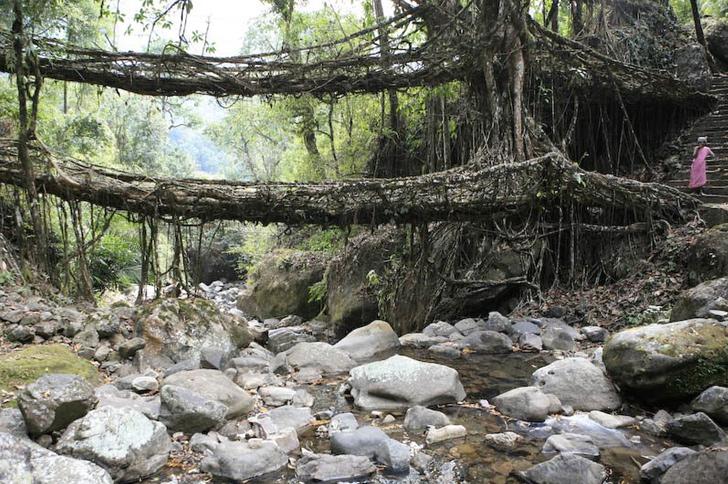 indian root bridge (5)