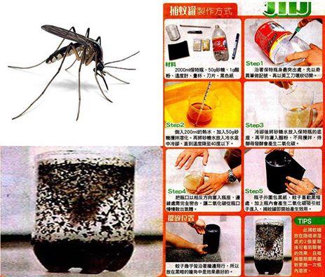 mosquito trap (1)