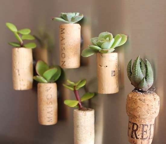 diy wine cork into fridge magnet and plant (1)