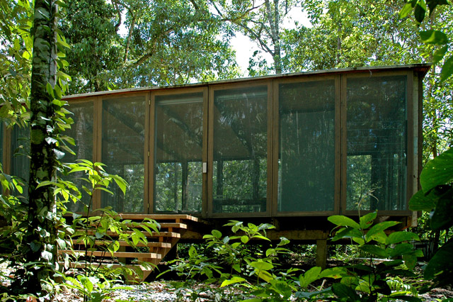 forest house in brazil with minimalist interior style (1)