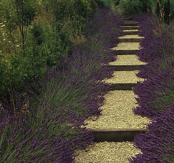 walk pathway to make your home and garden looks beautiful (21)