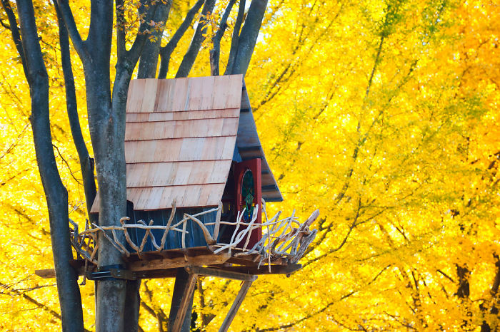 25-most-intense-tree-house-in-the-world (15)