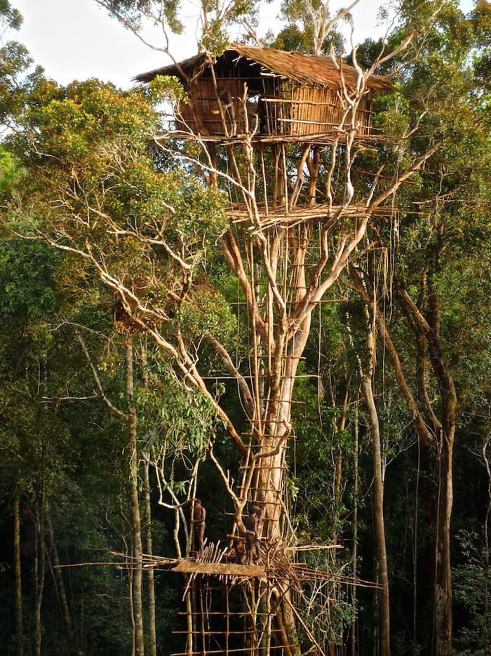 25-most-intense-tree-house-in-the-world (18)