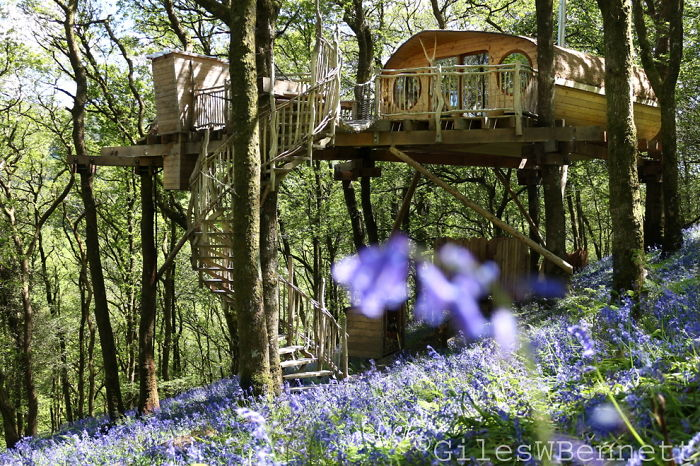 25-most-intense-tree-house-in-the-world (7)