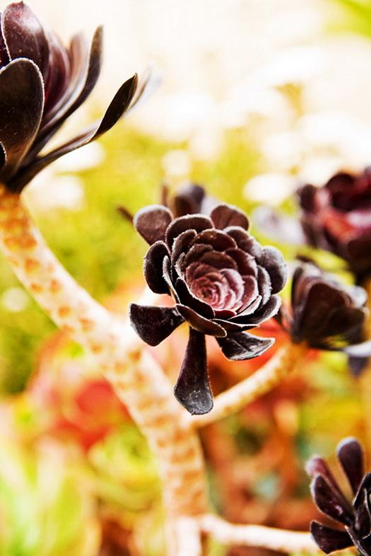 32-ideas-for-garden-decoration (21)