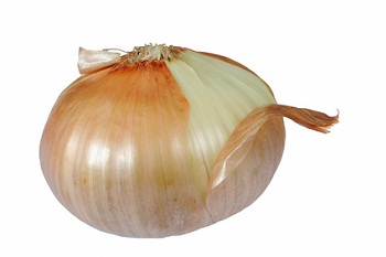 One onion bulb isolated