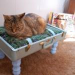 5 ไอเดียที่นอนแมวเหมียวทำมือ สร้างบรรยากาศการพักผ่อนให้กับเจ้าเหมียวของคุณ