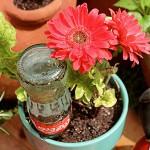 ไอเดีย DIY สุดเจ๋ง 'ขวดแก้วรดน้ำต้นไม้อัตโนมัติ' เพื่อให้สวนของคุณไม่เหี่ยวเฉาในช่วงเวลาที่ไม่อยู่บ้าน