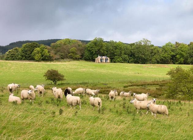 modern-farm-cottage (7)